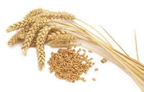 83920-wheat